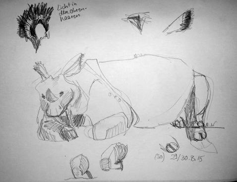 Nashorn liegt