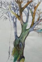 Baum_alt